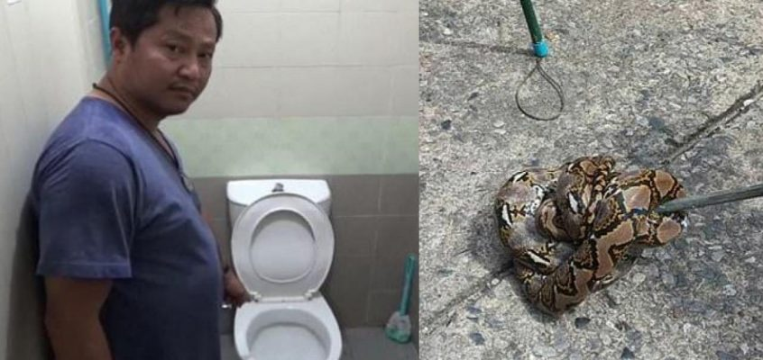 В Таиланде питон укусил мужчину за пенис
