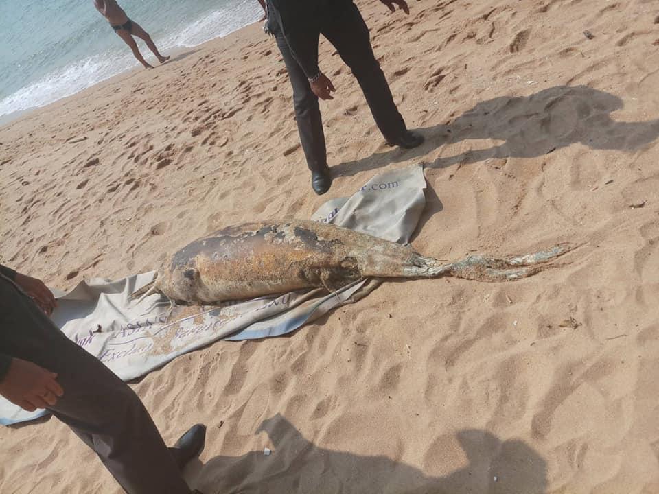 Труп дельфина выбросило на пляж Джомтьена в Паттайе