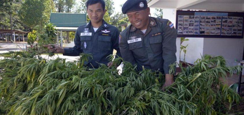 Легализация марихуаны в Таиланде - всё подробно