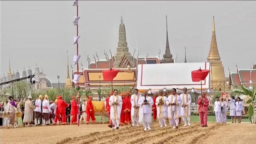 Священные волы предсказали Таиланду урожайный год