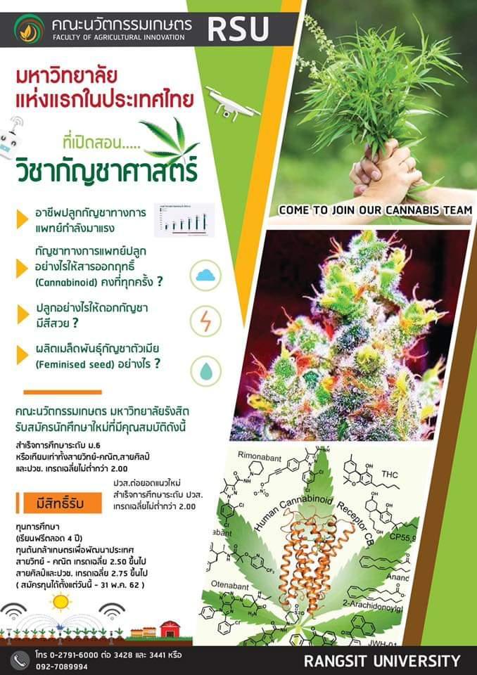 Таиландский университет будет готовить специалистов по выращиванию марихуаны