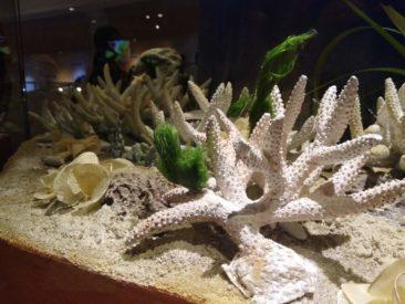 Музей естествознания в Таиланде - рекомендую посмотреть