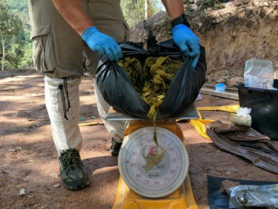 В Таиланде умер олень - в его желудке обнаружили 7 кг пластика