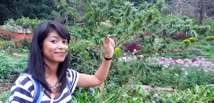Министр здравоохранения Таиланда призывает фермеров выращивать марихуану