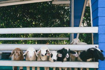 Что посмотреть в Сураттхани на юге Таиланда (часть 1)