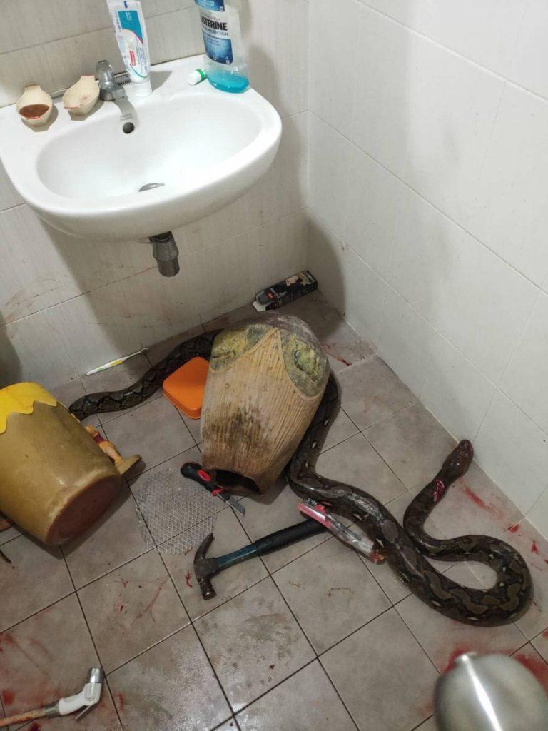 В Таиланде змея из унитаза чуть не убила женщину
