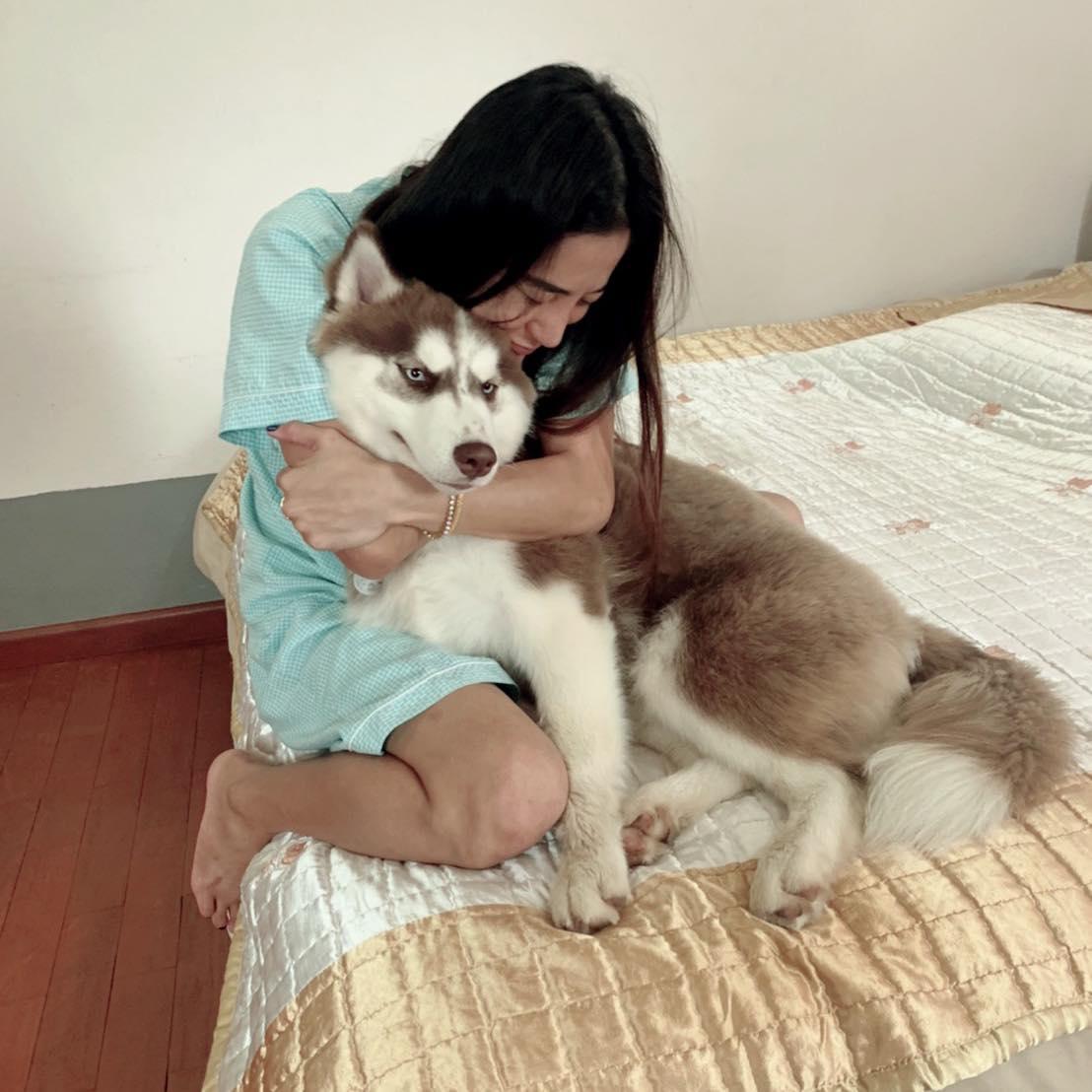 В Таиланде украли собаку хаски, чтобы расплатиться ею за ужин