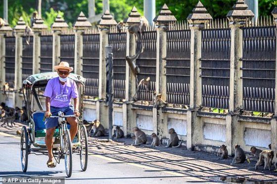 Обезьяны захватили город Лопбури в Таиланде и угрожают местным жителям