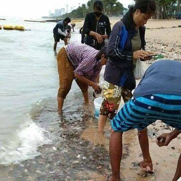 Шторм в Таиланде разрушил сотни домов и выкинул тысячи мидий на пляже Паттайи