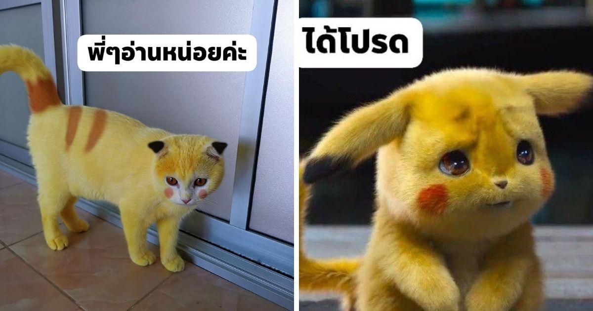 Жёлтая кошка в Таиланде стала тайским Пикачу (фото)
