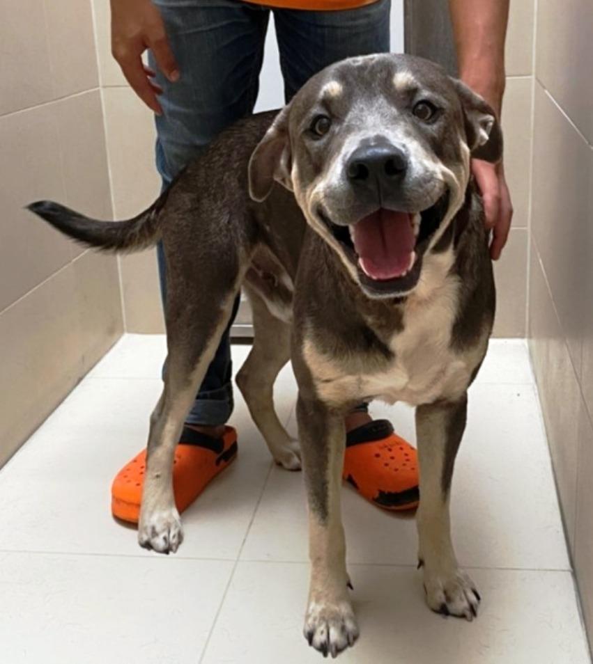 Ирландец получил судимость в Таиланде за то, что бросил свою собаку на улице