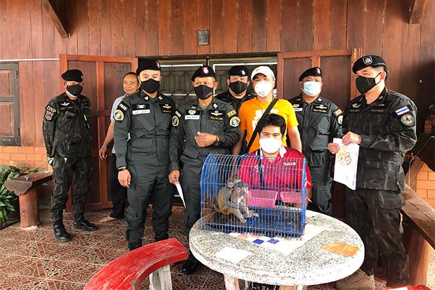 10 лет тюрьмы за продажу макак в интернете грозит гражданину Таиланда