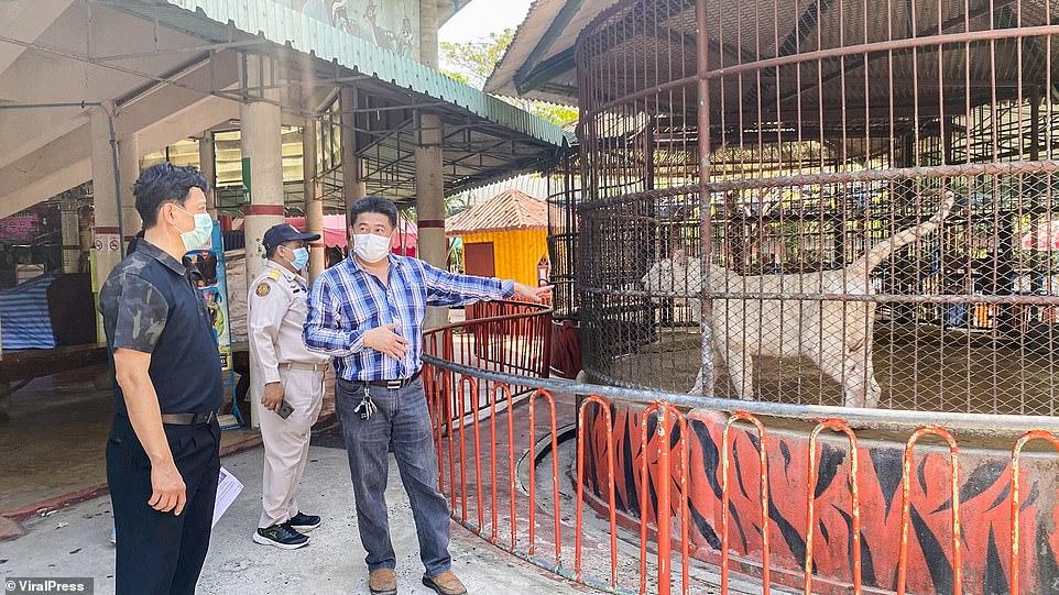 Голодные животные в Таиланде выпрашивают еду у посетителей «Ада для животных на Земле»