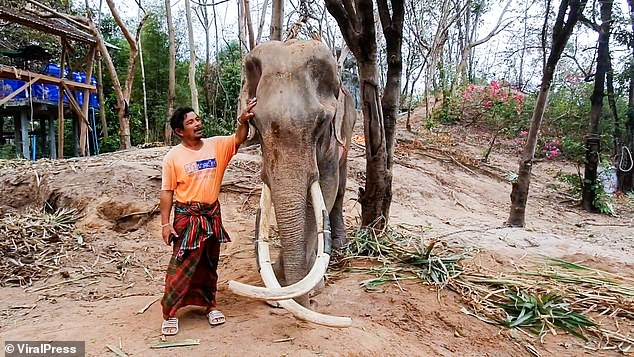 Умирающего от голода слона спасают в Таиланде